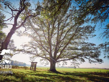 Sortie Nature - Balade mycologique aux Landes de Versigny