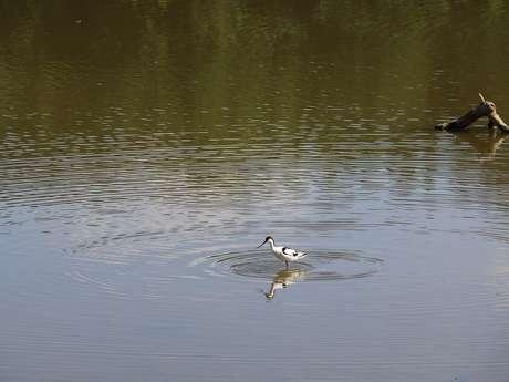 Découverte de la richesse ornithologique du réservoir