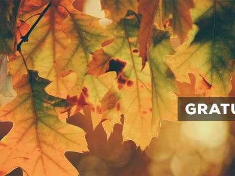 """Sortie nature à Laon : """"Les arbres en automne"""""""