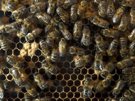 Musée vivant de l'abeille et caves à hydromel