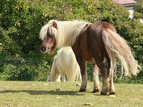 Ecole d'équitation de la forêt de Retz