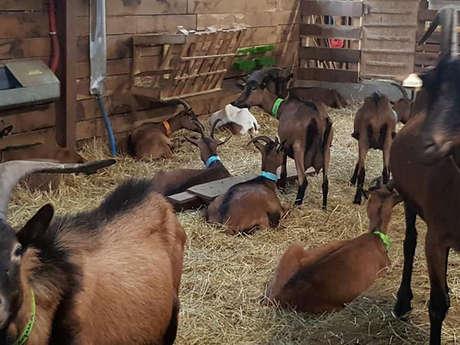 La Chèvrerie de Bruyères