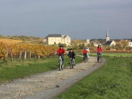 La Route des Vignobles