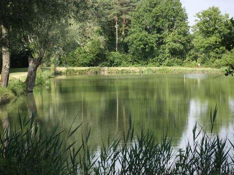 Le sentier de l'étang d'Arbonneau