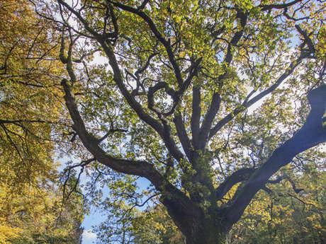 Le Chêne d'Anatole Le Braz