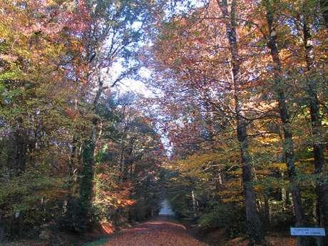 Forêt domaniale de Montauban de Bretagne
