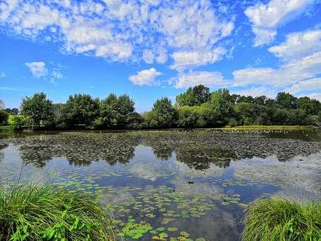 L'étang de Blavon
