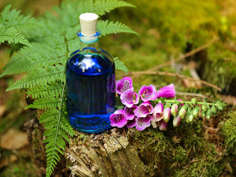 Balade : Découvrez les plantes médicinales et comestibles de saison à Brocéliande