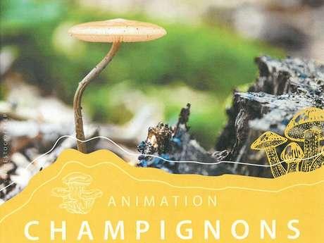 Animation Champignons