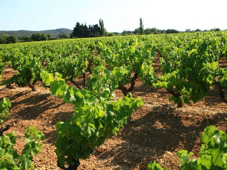 Les Vignerons du Castellas