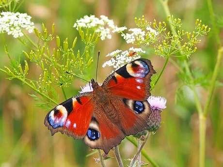 Tandem flore et insectes à Vendôme