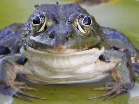 Fréquence grenouille à Vendôme