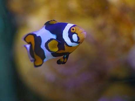 Grand Aquarium de Touraine