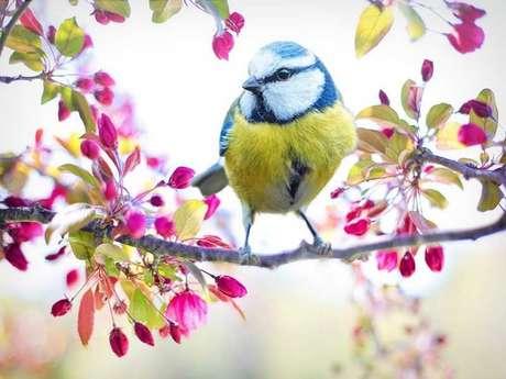 Instants Nature - Oiseaux des villes et des jardins à Vendôme