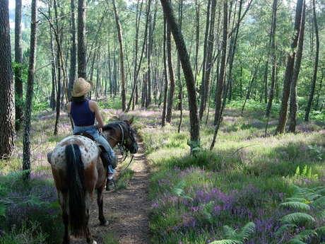 De la Bouriane à Rocamadour, entre Périgord noir et Haut Quercy - 6 jours à cheval
