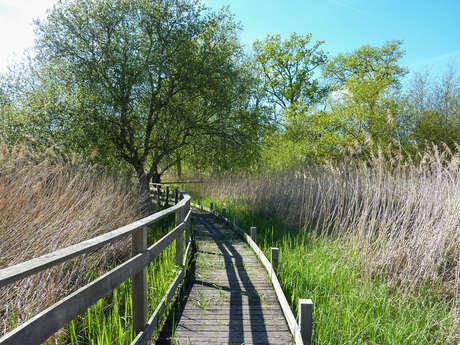 Le Marais de Bonnefont, Réserve Naturelle Régionale