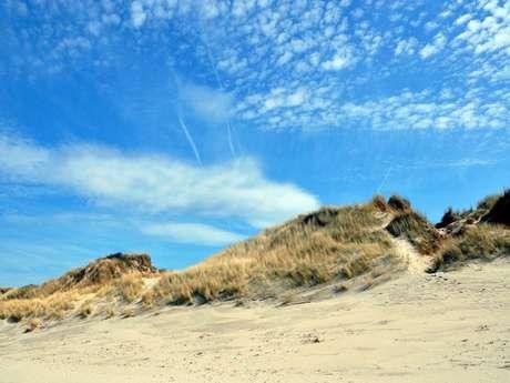 Enquête de nature dans les dunes