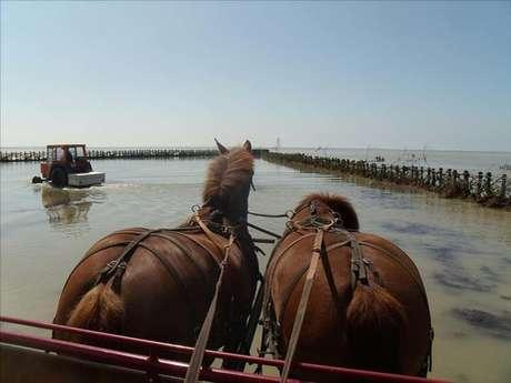 Ferme Equestre Esnol-Binet