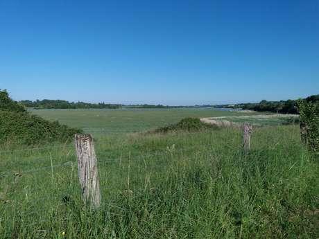 Les marais d'Heugeuville-sur-Sienne