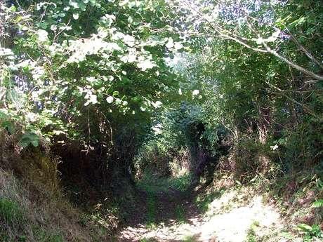 Association Chemins Verts