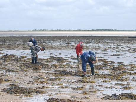 Initiation pêche aux palourdes