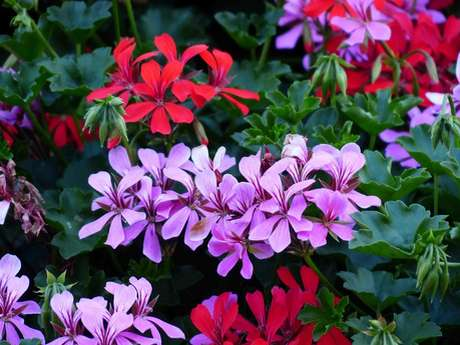 Atelier enfants > confection de fleurs, papillons