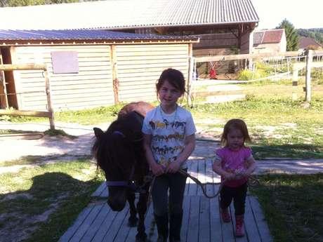 Les Ecuries du Shamrock stables