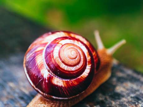 Découverte hélicicole: Liméro l'escargot Mayennais