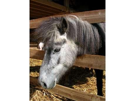 Poney Bonheur Equestrian Centre