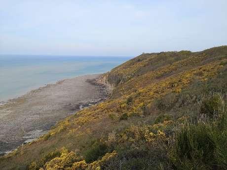 Les oiseaux et la biodiversité des falaises