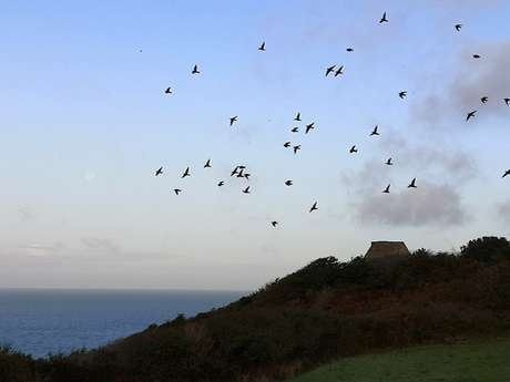 Les migrations aux falaises
