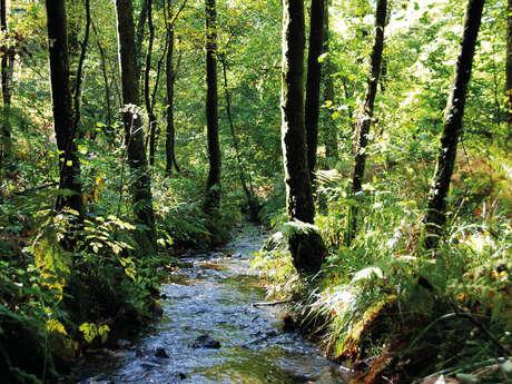 Sortie nature, découverte des plantes sauvages comestibles