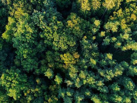 Sortie Nature: les écosystèmes forestiers