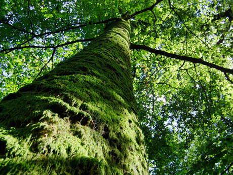 Sortie Nature : Les métiers de la forêt