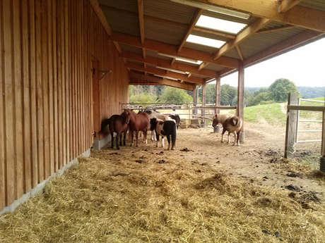 Les Petits Cavaliers Pony Club