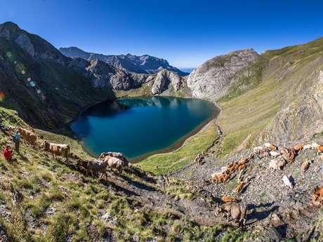 """Visite culturelle et pastorale """"Transhumance sans frontière : de Torla à Gavarnie"""" avec les Guides Culturels Pyrénéens"""