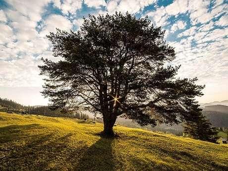 """Journées du Patrimoine, de Pays et des Moulins - Visite balade """"L'arbre vie et usages"""""""