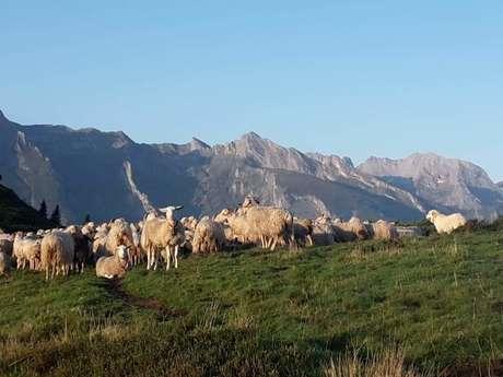 Promenade pastorale, dîner avec de l'agneau de pays et nuit en refuge et chants Pyrénéens .