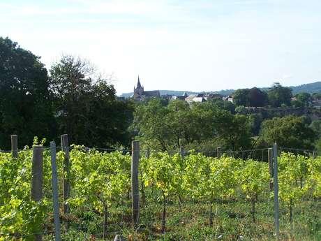 Coteau des vignes