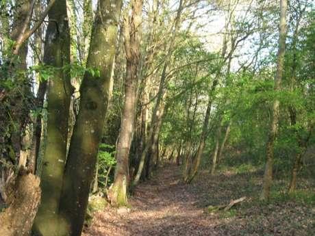 Sentier pic epeiche dans la forêt
