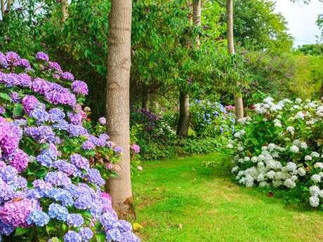 Jardin Shamrock