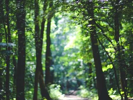 """[Balade Nature] """"De la mare des Salines au Bois de Rosendal"""""""
