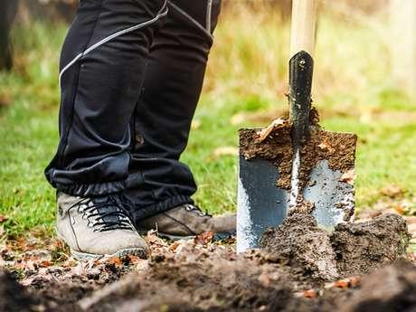 Comment préparer son jardin l'hiver, apprendre à tailler les arbres…