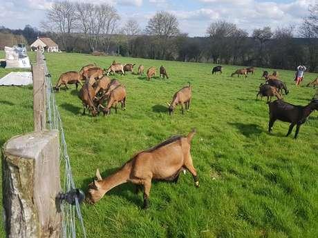 Ferme de la Chevrière : Fromages de chèvres