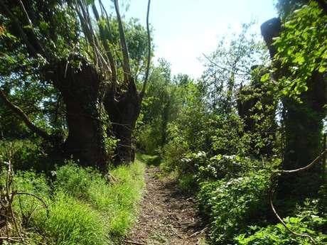 A deux pas de Lisieux - Départ :  Saint-Pierre-des-Ifs