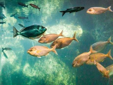 Vers une pêche responsable et durable