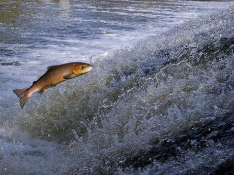 Léguer en Fête - Le seigneur des eaux vives