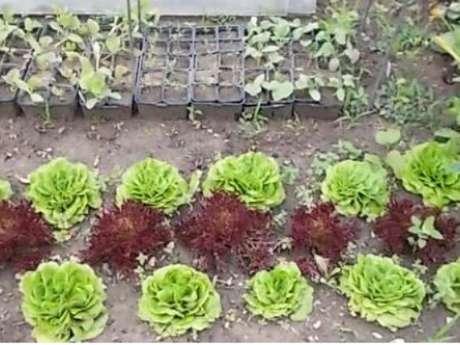 Ateliers jardinage ensemble, cultivons nos passions de jardinage