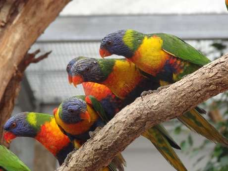 Les jardins animaliers Biotropica