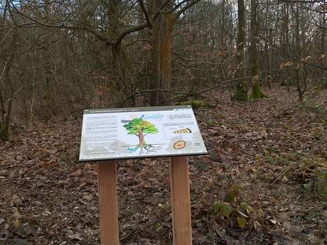 Forêt domaniale de Bord-Louviers